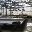 inside_glasshouse_2